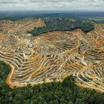 Importation d'huile de palme : la France donne son feu vert