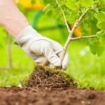 Pour le chercheur Thomas Crowther, planter des arbres suffit pour sauver la planète
