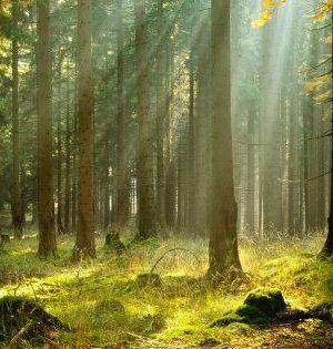 WEF-planter-arbres-réchauffement-climatique